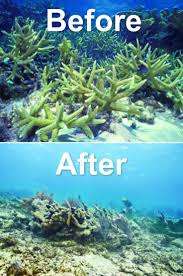best 25 what is marine biology ideas on pinterest marines