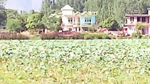lotus pond at nalsar near ner chowk youtube