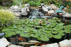 killer chlorine in fish ponds petcha