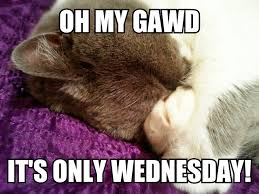 Meme Hump Day - diki catloaf hump day