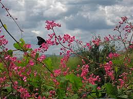 arizona flowers august in arizona flower and landscape photos in southeast arizona
