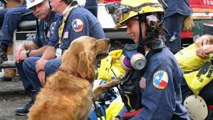 bretagne last 9 11 ground zero search dog dies at age 16