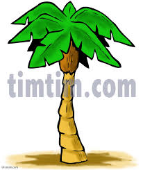 coloring pictures of a palm tree palm tree drawing color clipartxtras