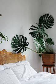 Plants For Bedroom Best 25 Plants In Bedroom Ideas On Pinterest Bedroom Plants