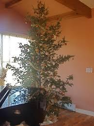 brown christmas tree large christmas astonishinglie brown christmas tree image inspirations