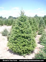 balsam fir christmas tree buy real christmas tree online