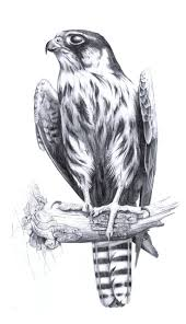 373 best drawing birds images on pinterest draw animals and