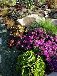 mixed border succulents and perennials combined beautiful