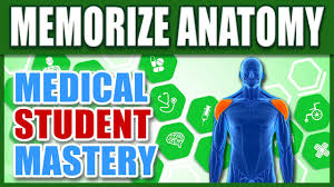 Human Anatomy And Physiology Terminology Human Anatomy How To Memorize Biology Medical Terminology