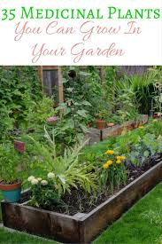 Natural Pesticides For Vegetable Gardens by 35 Medicinal Plants You Can Grow In Your Garden Medicinal Plants