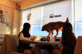 Dogs At Dinner Table Bau Haus Visiting The Dog Cafe In Seoul
