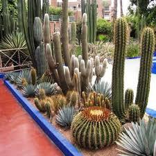 buy flora fields cactus easy mix seeds india buy plant