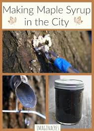 Backyard Sugaring 44 Best Maple Syrup And Other Tree Syrups Images On Pinterest