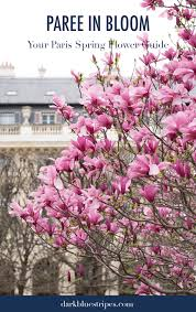 paree in bloom your guide to paris spring flowers dark blue