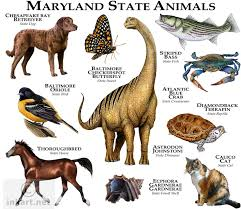 Maryland wild animals images Full color illustration of a state animals of maryland animals jpg