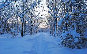 snow path winter hd wallpaper trees nature trail fresh forest