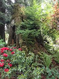 Artful Gardens Vancor Gardens Dogwood Garden Club