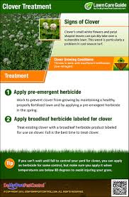How To Get Rid Of A Beehive In Your Backyard How To Get Rid Of U0026 Kill Clover Clover Yard Treatment U0026 Control