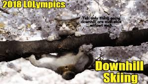 Funny Winter Memes - i can has cheezburger winter funny animals online cheezburger