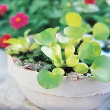 573 best wabi kusa and water plants images on pinterest aquarium