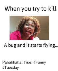 Tuesday Memes Funny - 25 best memes about funny tuesday funny tuesday memes