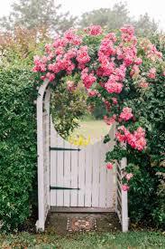flowers garden city 332 best climbing roses images on pinterest climbing roses