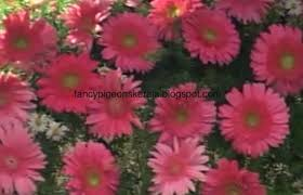 Ideas For Gerbera Flowers Create And Develop Successful Businesses Through Farm Ideas