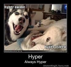 Hyper Dog Meme - latest memes memedroid