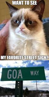 Just Girly Things Meme Generator - the 25 best cat meme generator ideas on pinterest grumpy cat