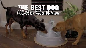 7 best dogs water fountains u0026 dispensers for cats too
