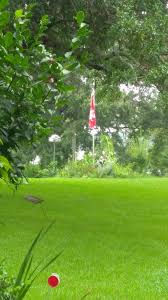 British Flag Nickname In The Wild Celtic British Flag Vexillology