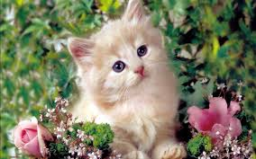 beautiful kittens redefining the face of beauty beautiful kittens cat care