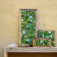 Succulent Kits by Succulent Art Photo Gallery Of Succulent Wall Art Home Decor Ideas