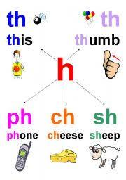 worksheet th ph ch sh