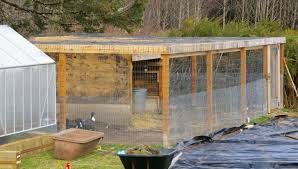 keeping ducks in a pen only backyard chickens