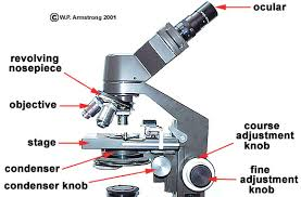 Parts Of A Compound Light Microscope Lab Manual Exercise 1