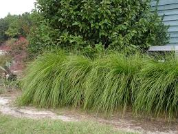 887 best grasses trawy images on gardens grasses