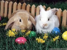 bunny easter easter bunny wallpapers frankenstein