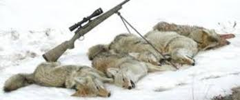 Coyote Hunting Lights Hunting Light Reviews