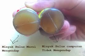 Minyak Bulus Asli Papua ciri minyak bulus asli vs palsu serta cara membedakannya pusat