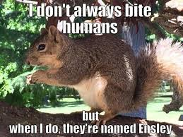 Rodent Meme - squirrel memes home facebook