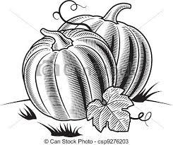 pumpkin black and white pumpkin vectors of retro pumpkins black and white retro pumpkins in