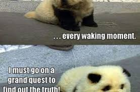 Cute Animals Memes - 30 funny animal captions part 9 memes animals pictures of cute