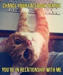 Relationship Memes Facebook - vh cat changes facebook relationship status