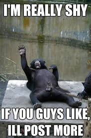ballsy bear memes quickmeme
