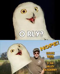 Meme Orly - image 175440 nope chuck testa know your meme