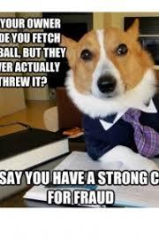 Dog Owner Meme - 45 funny dog memes dogtime
