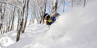 about evergreen backcountry guides skiing japan powder in hakuba