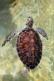 64 best stained glass turtles images on pinterest fused glass