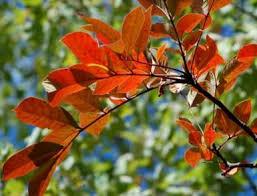 die besten 25 poison oak leaves ideen auf gifteiche